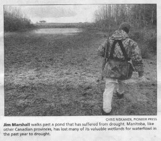 Jim Marshall walks past a pond that has suffered from drought. Manitoba, like other Canadian provinces, has lost many of its valuable wetlands for waterfowl in the past year to drought.